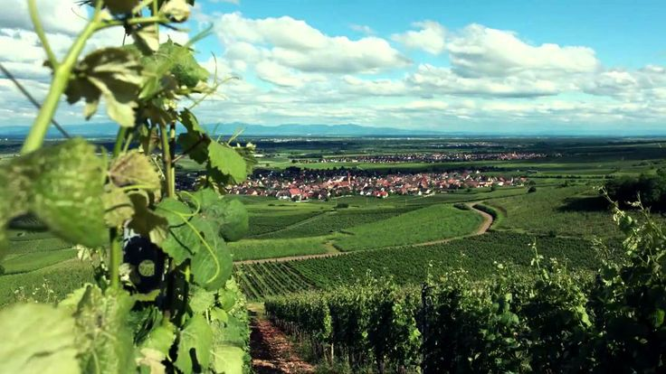 Le jardin des vins d 39 alsace vid os d 39 alsace pinterest - Les jardins d alsace ...