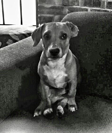 A boy named Rocky..