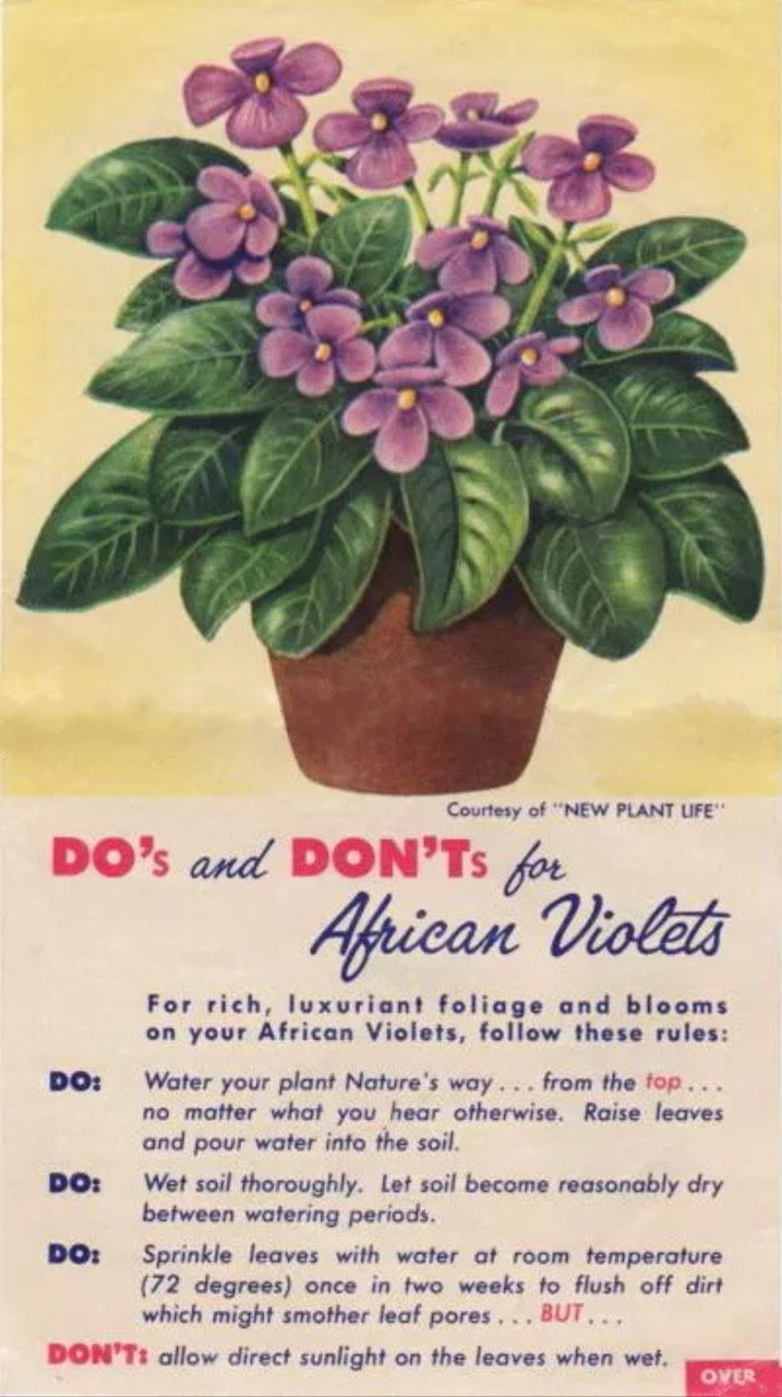 Do's And Don'ts For African Violets 1950's