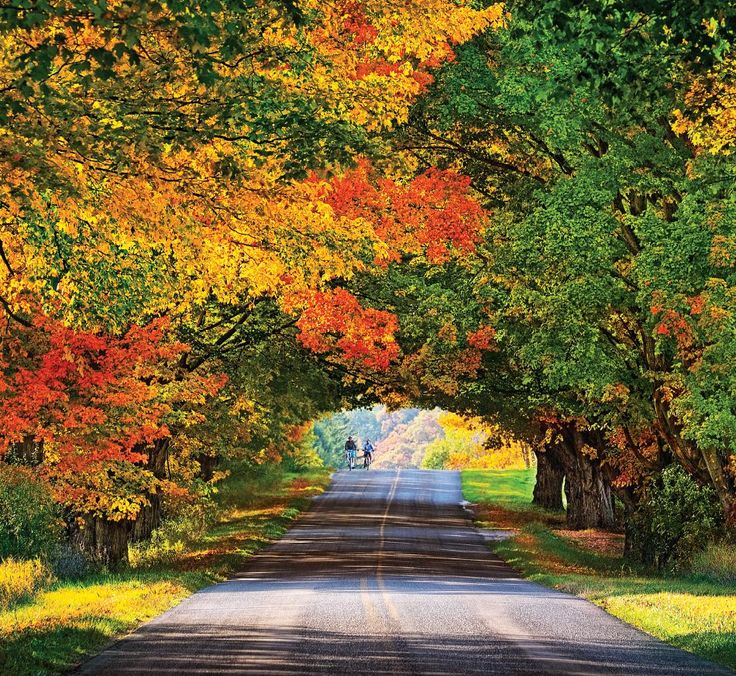 """Conrad Road """"Tunnel of Trees,"""" Ludington area Not sure how I have missed this. On my list ..."""