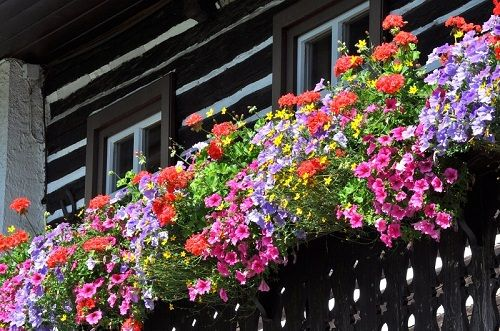 South and West facing balconies are exposed to full sunlight for most of the day. It's a good thing but keep in mind that the plants grown in garden can freely expand their roots, whereas potted plants have limited space to grow and they depend on you for watering and nutrients.