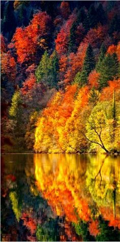 If you have fall seasons where you live remember when planting trees that the right colors placed together can create magical colors in your landscape.  Nature put these colors together and they are perfect.