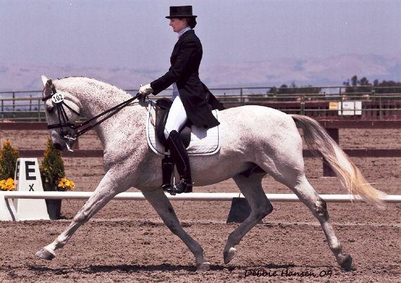 """Выездка. Идеальная посадка. Всадник должен как бы стоять на лошади, а не сидеть в седле, как принято считать. Чтобы когда, к примеру убрать из-под всадника лошадь, то он бы приземлился на ступни, а не на """"пятую точку"""". из  книги И.М. Кизимова """"Секреты Мастерства""""."""