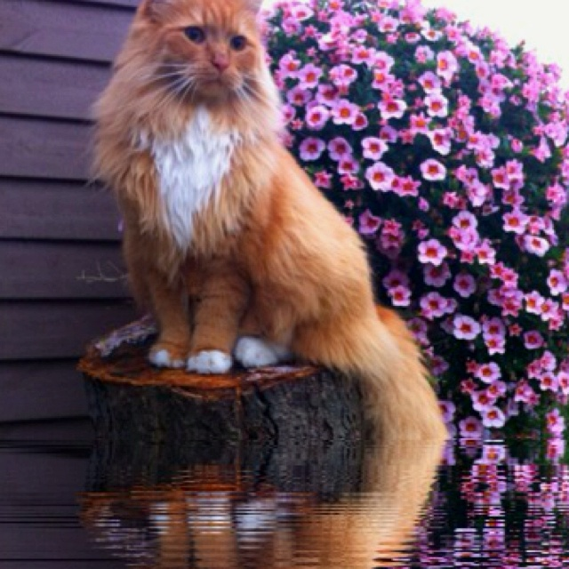 Beautyfull cat