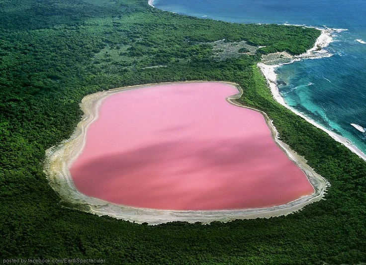 "The pink and lovely...""HILLER LAKE"" (Western Australia)"