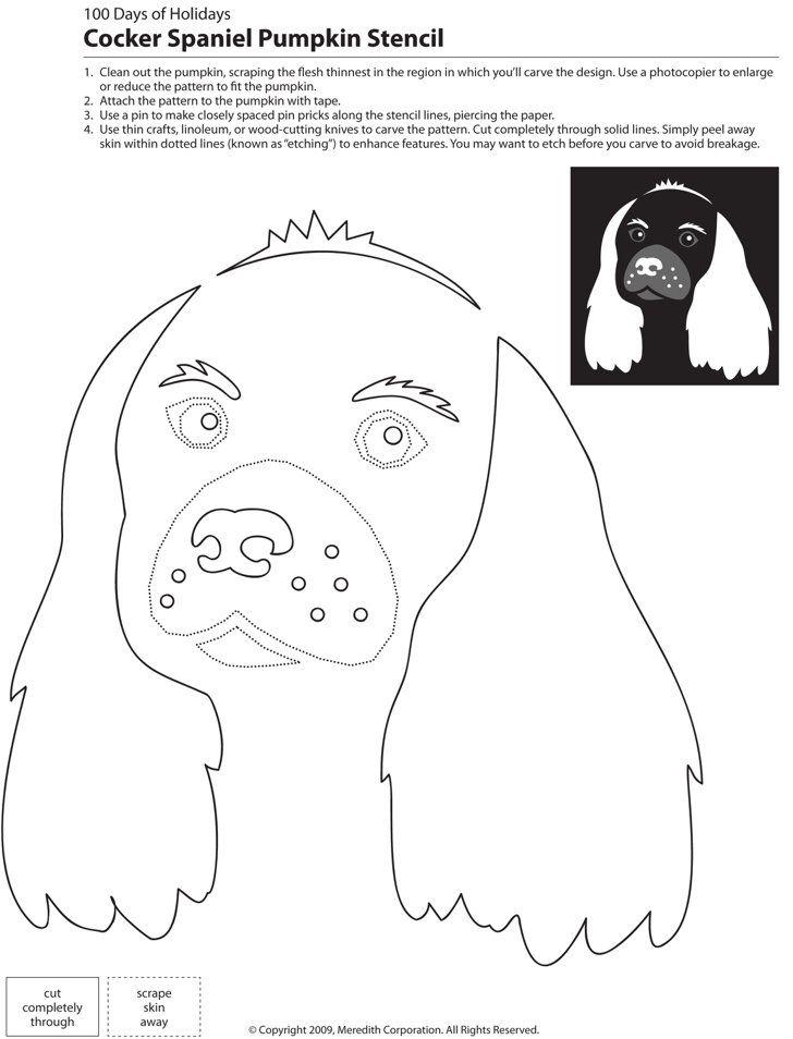 9 best lz images on Pinterest | Hunde, Französische bulldoggen und ...