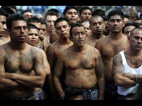 Image result for ms 13 gangs