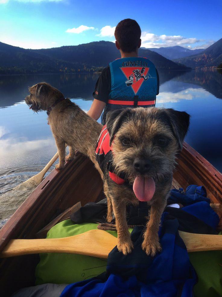 "Cola Border Terrier on Twitter: ""Canoe trip https://t.co/IfyF0mEf6b"""