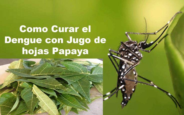 Como Curar el Dengue Rapido..Curar el dengue con hojas de papaya..el mejor remedio para curar el dengue de forma natural