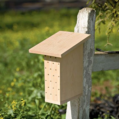Mason Bee House by Alexandra Kennedy, familyfun: Due to disease and other factors, bee populations are declining, and fewer pollinating insects means trouble for crops and wild plants alike. You can help counteract this trend by building a simple home for orchard mason bees, a wildly productive pollinator found in most areas of the United Stateswhich are gentle, don't swarm and rarely sting. #Bees #Bee_House #Alexandra_Kennedy #familyfun: Bees House, Mason Bees, Bee House, Bees Population, Wild Plants, Pollin Insects, Simple Home, Plants Alike, Orchards Mason