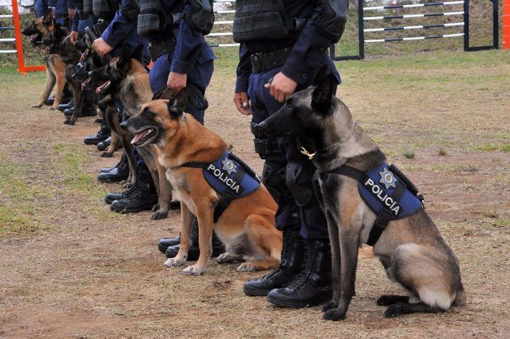 México ofrece en adopción a perros policías tras jubilarlos