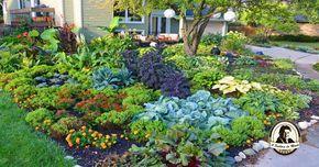 Um jardim comestível é mais que uma horta biológica.