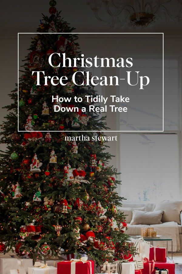 Christmas Tree Clean Up How To Tidily Take Down A Real Tree Christmas Tree Tree Christmas Inspiration