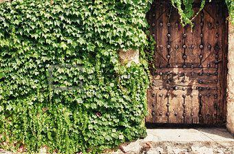 Wooden door and ivy