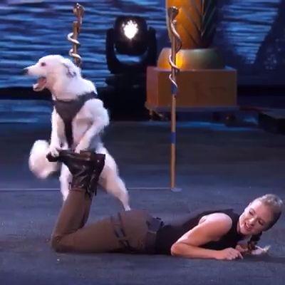 Um desempenho muito surpreendente na América tem talento desse cão   – Tier