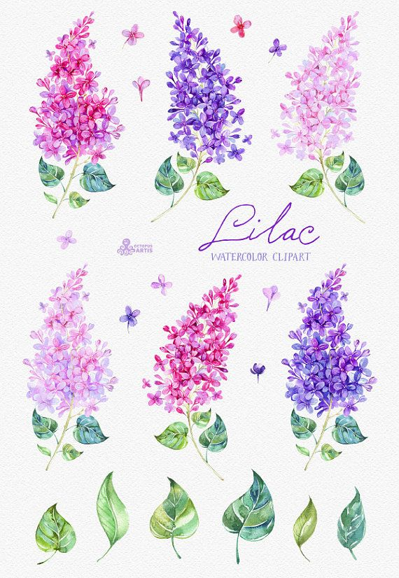 Lilac Watercolor Clipart card floral elements by OctopusArtis