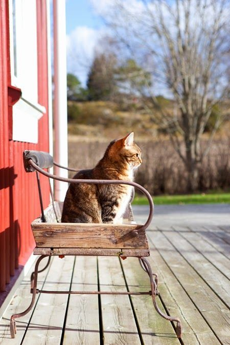 This photo combines two of my favorite things: cats and an old buggy seat. Love old furnishings repurposed! Looks like this cats favorite place to sit and enjoy the morning sun. :)