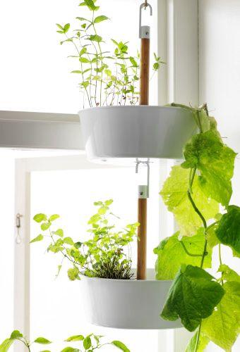 Ampel med gröna växter som kan hängas i ett fönster.