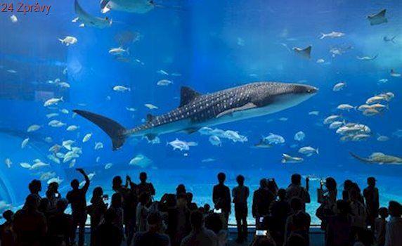 Žraloci, rejnoci i delfíni. Podívejte se na obří akvária, která vám vyrazí dech