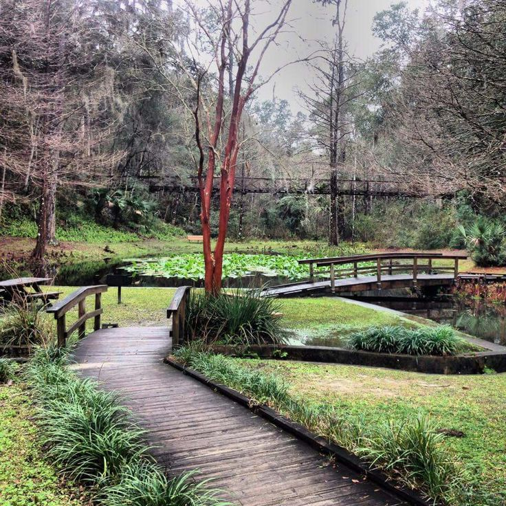Best 25 Palatka Florida Ideas On Pinterest Ravine Gardens State Park Fl Sec Of State And Florida
