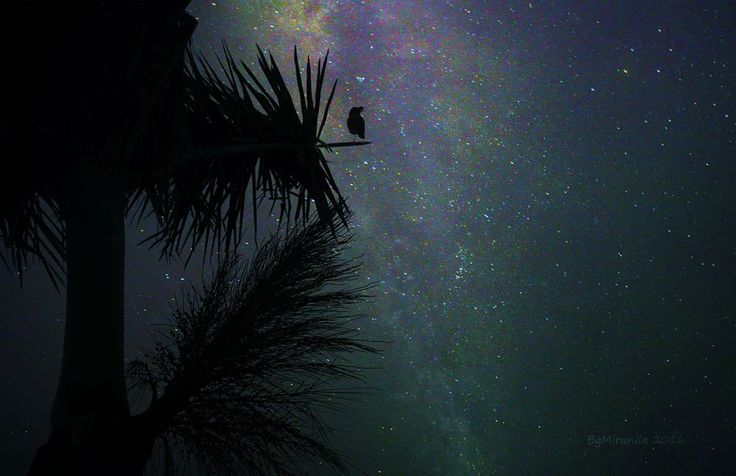 Photograph by Bernard M. - The Guardian - A starling seems guarding the Milky way of Calubcub Bay, Batangas the Philippines. These are 2 exposures,I shoot\on Raw, the milky way setting is f/3.5, 30 sec., ISO-1600, the palm and bird is on night auto-mode then merged them to create this image. Then adjust the brightness, contrast and exposure.