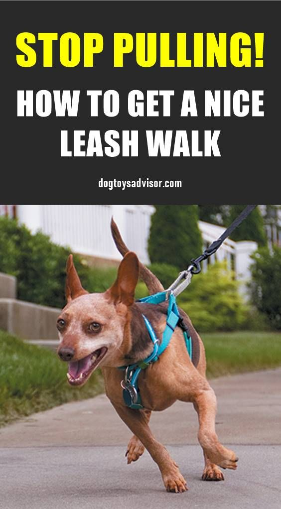Has Walking Your Dog Turned Into A Constant Game Of Tug O War Use