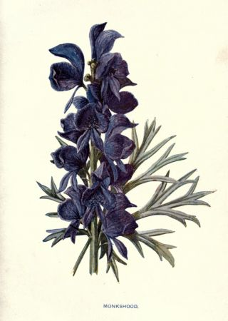 wolfsbane illustration - Google Search