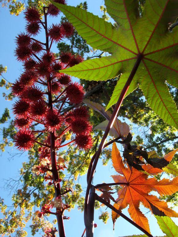 Photo In OSH Garden Oct 18, 2013