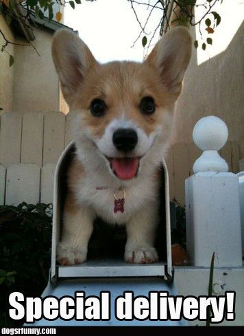 funny delivery photos - Google Search
