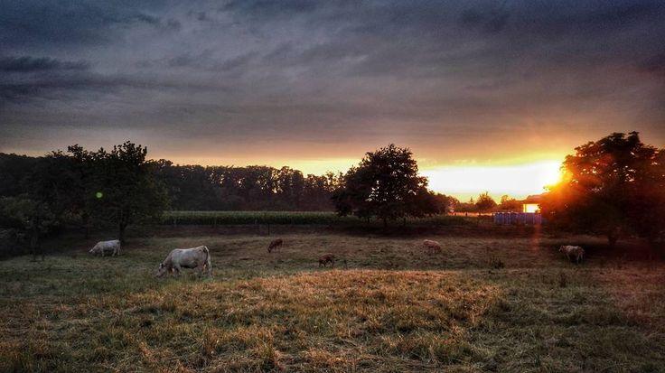 Wetter... #Osnabrück #Germany #nature #grass #sunset #landscape #tree #outdoors #sky #field #dawn #sun #panoramic #hayfield #dusk #agriculture #cloud #fall #rural