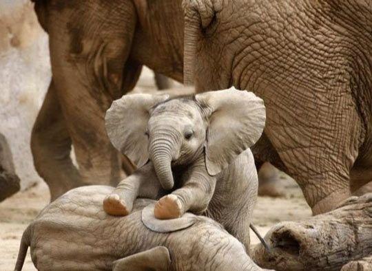 The Internet needs more little baby elephants...