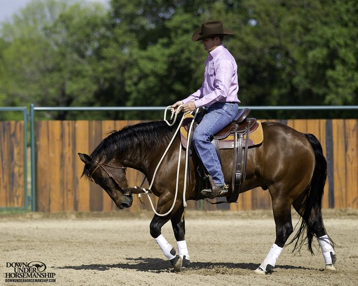Riding Exercise #1: Vertical Flexion at the Walk  Goal: To be able to soften the horse to the bit vertically at a walk. Anytime you pick up on the reins with the lightest degree of pressure and add leg pressure, the horse should immediately soften his face, tuck his nose in and create slack in the reins without trying to speed up.  More about the exercise: https://www.downunderhorsemanship.com/Store/Search/intermediate