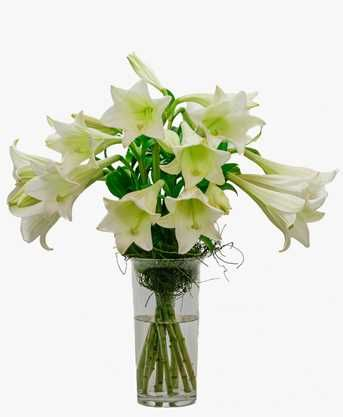 St Joseph Lilly Vase