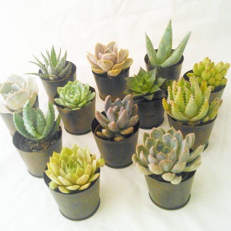 Cadeaux aux invités - Mini plantes grasses - Mariage