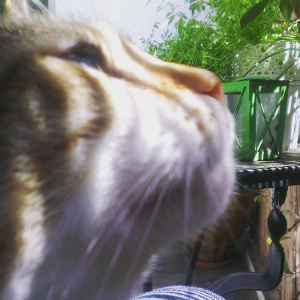 Caramela, kissed by the sun!