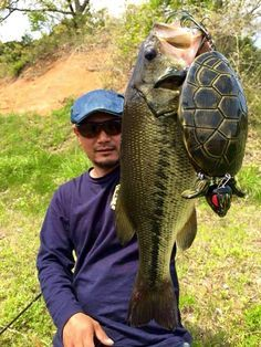 Wow! Check out the turtle lure!