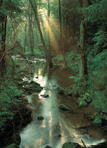 Bialowieza- the last European primeval forest. Poland