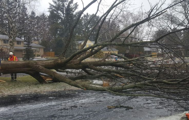 Residents & businesses have been plagued with ice storms, snow storms & even high winds breaking old & unstable trees. Call an Arborist for tree inspection.