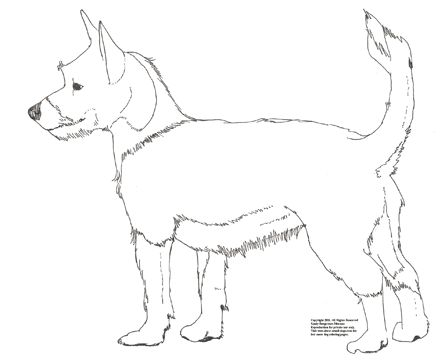 The Podengo Is An Ancient Multi Sensory Hound Breed Of Dog From Portugal There