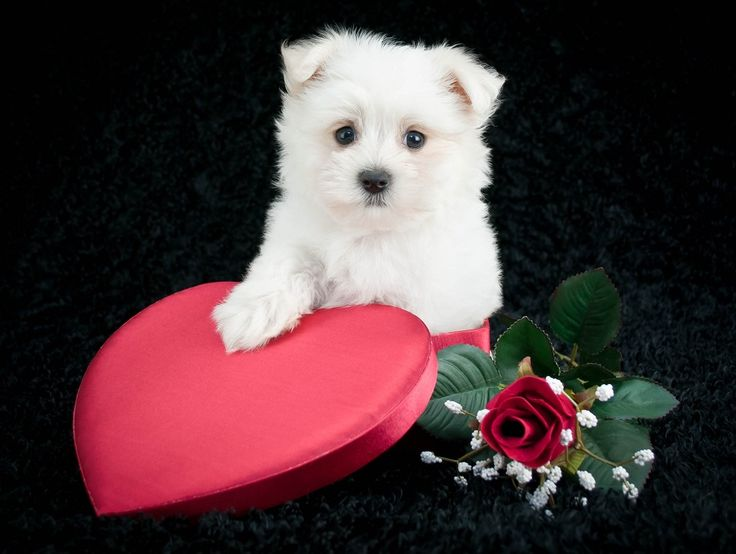 free valentines day gifts for dogs and dog parents