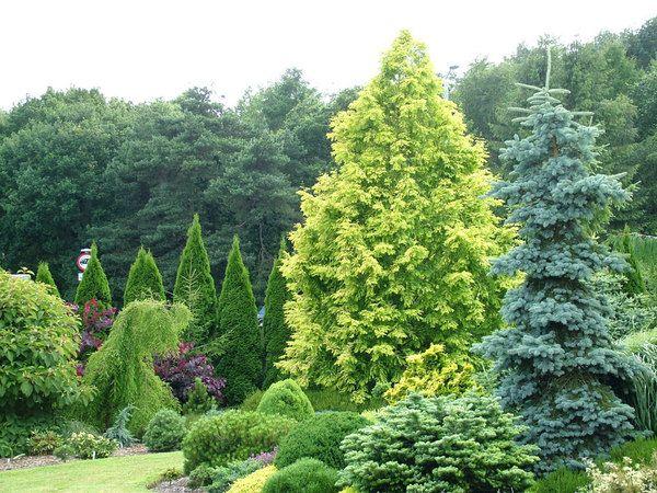 foxhollow garden dorset