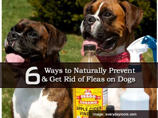 How To Get Rid Of Worms In Puppies Naturally
