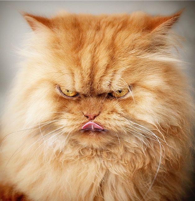 Já falamos aqui no Hypeness do gato mais zen do mundo que virou sucesso na internet, e não poderíamos mostrar um outro bichano que tem conquistado todo mundo pelo motivo oposto: ele parece ser o gato mais mal humorado do mundo.  Apesar da cara de bravo, os donos garantem que Garfi é um dos gatos mais doces que já conheceram. Ele é um ótimo...