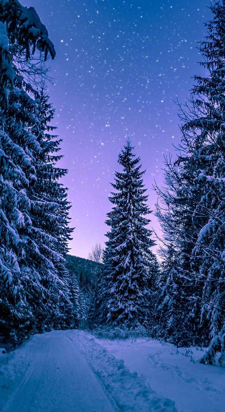 Download Branches cold conifers Wallpaper for your Android