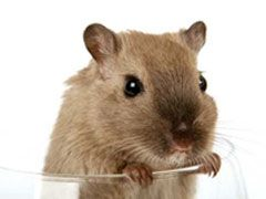 Hamsters as Pets: Pros and Cons - http://www.mypetarticles.com/hamsters-as-pets-pros-and-cons/#more-2077