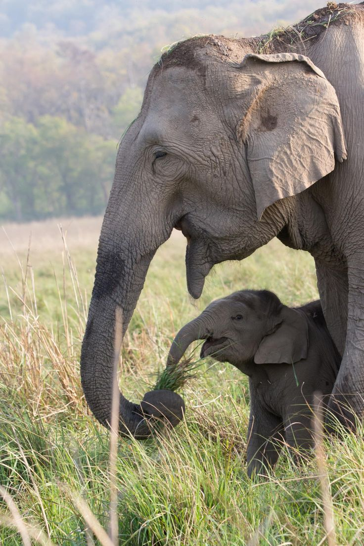 die besten 17 ideen zu elefanten auf pinterest elefantenbabys gl cklicher elephant und. Black Bedroom Furniture Sets. Home Design Ideas