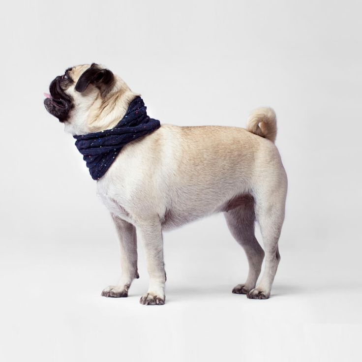 Canada Pooch Dog Scarf | The Navy Cambridge Cable-Knit scarf adds a stylish touch to every Fall outfit with the Canada Pooch Scarf Collection