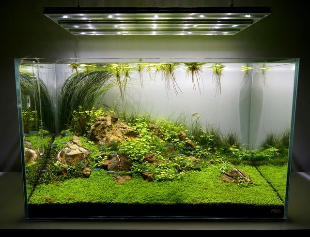 ... , Aquarium Ideas, Aqua Scape, Nature Aquascape, Scape Aquarium Bubble