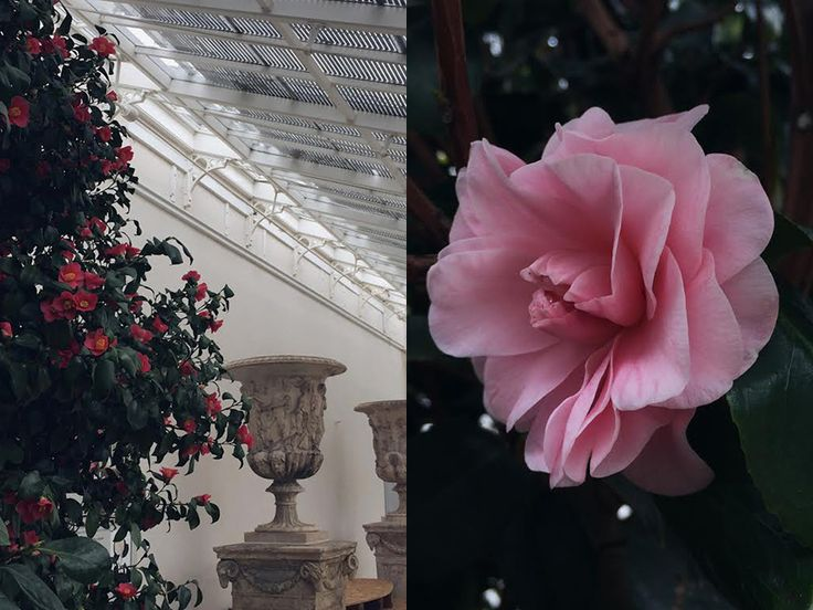 AESME blog | Chiswick House camellia conservatory