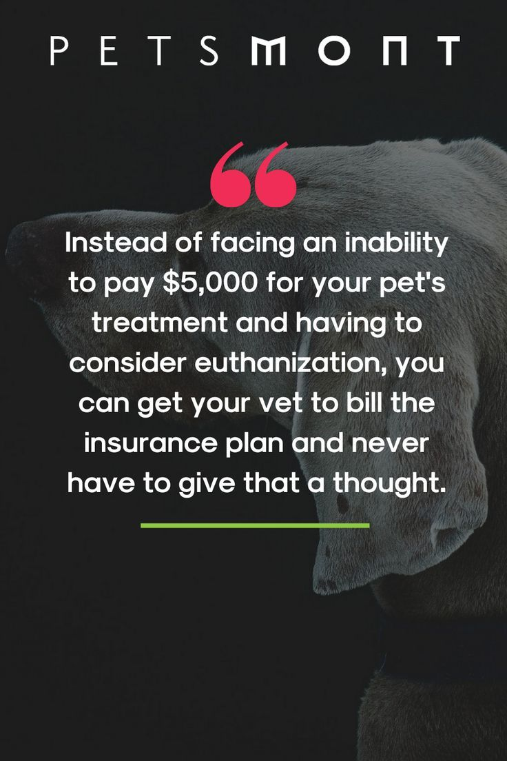 Will Pet Insurance Ever Save You Money In 2020 With Images Pet Insurance Pet Health Insurance Veterinary Care